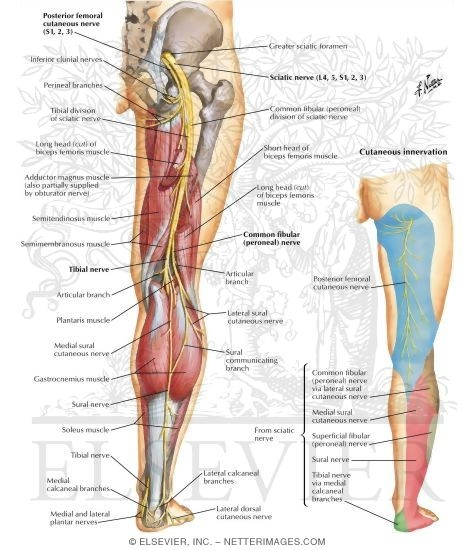 Is it sciatica bodywork by bobbi wellness center dont panic its not as bad as it sounds there are many treatment options as soon as the root cause is found sciatica altavistaventures Images